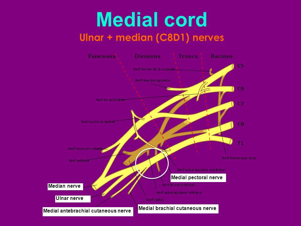 Ulnar + median (C8D1) nerves