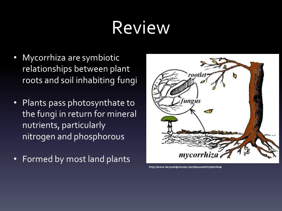 Review Mycorrhiza are symbiotic relationships between plant roots and soil inhabiting fungi.
