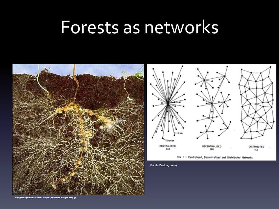Forests as networks Martin Dodge, 2007)