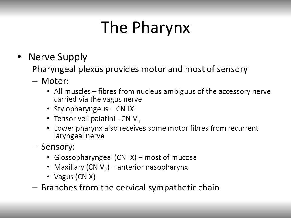 The Pharynx Nerve Supply