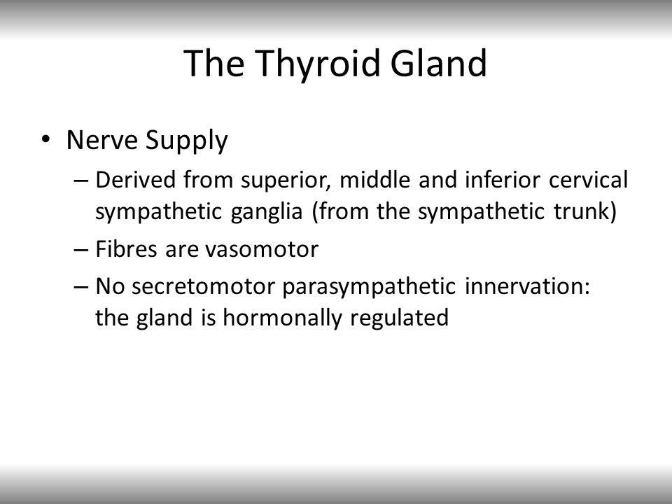 The Thyroid Gland Nerve Supply