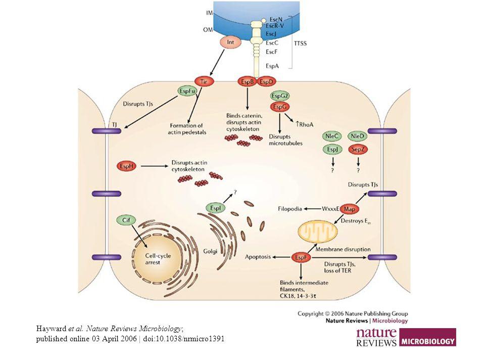 Hayward et al. Nature Reviews Microbiology;