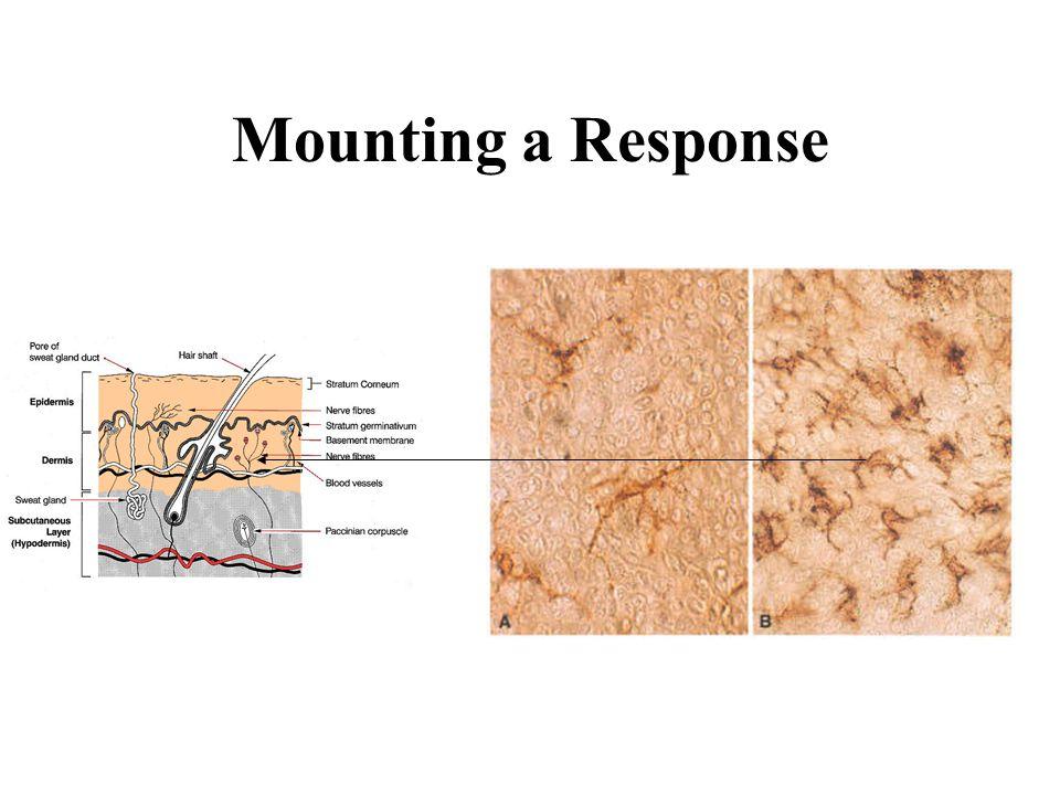 Mounting a Response