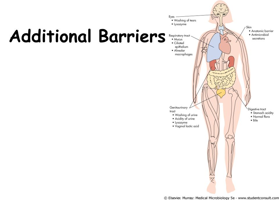 Additional Barriers