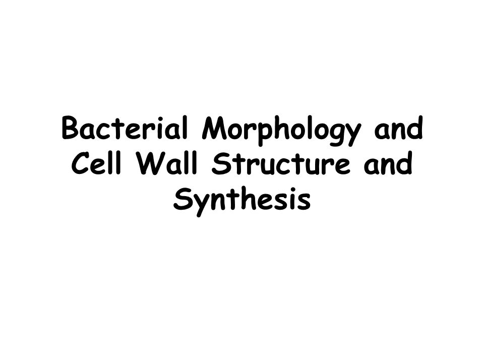 Bacterial Morphology and Cell Wall Structure and Synthesis