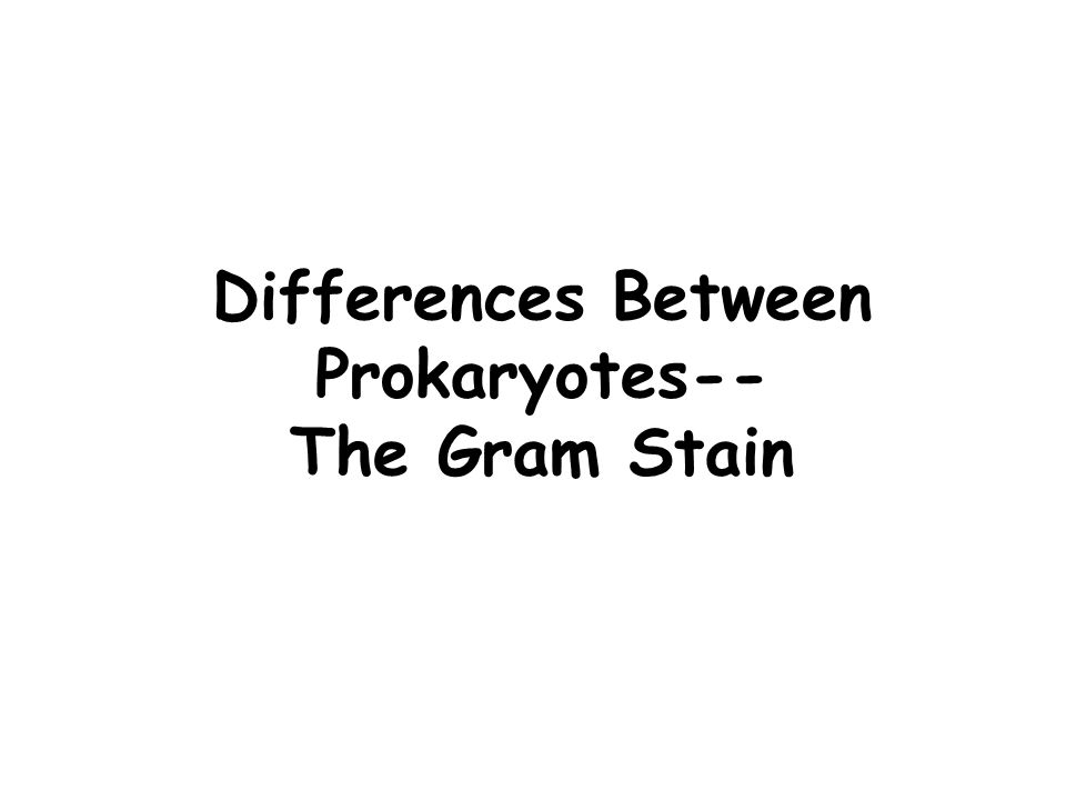 Differences Between Prokaryotes-- The Gram Stain