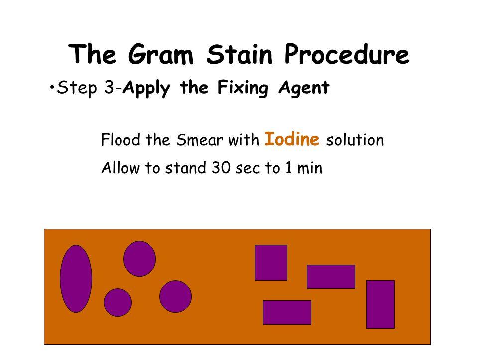 The Gram Stain Procedure