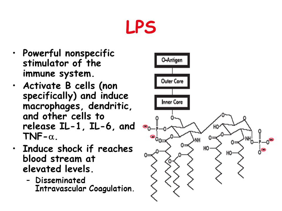 LPS Powerful nonspecific stimulator of the immune system.