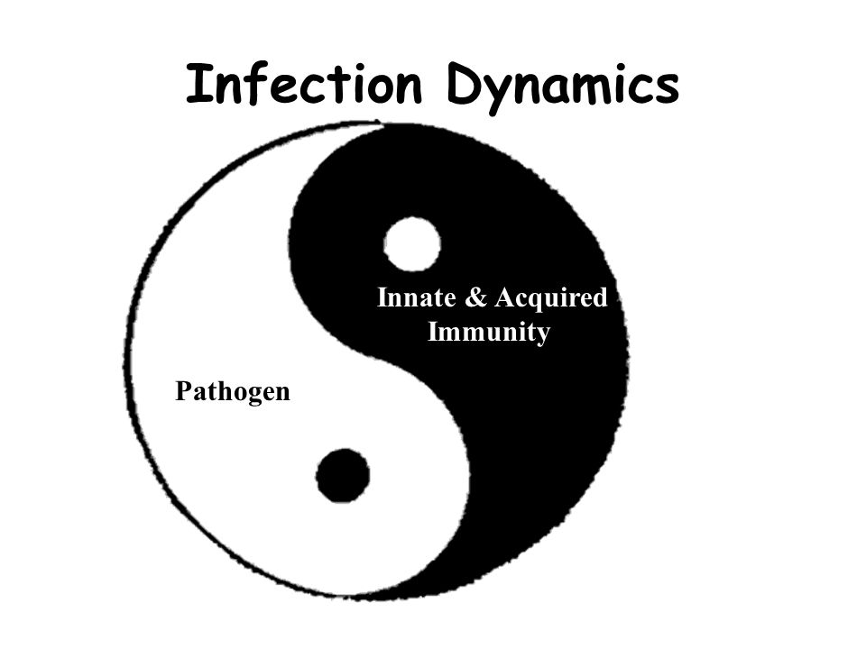 Infection Dynamics Innate & Acquired Immunity Pathogen