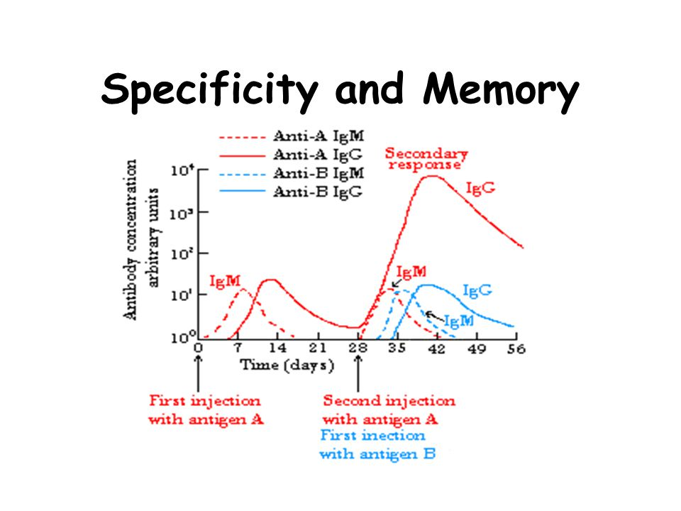 Specificity and Memory
