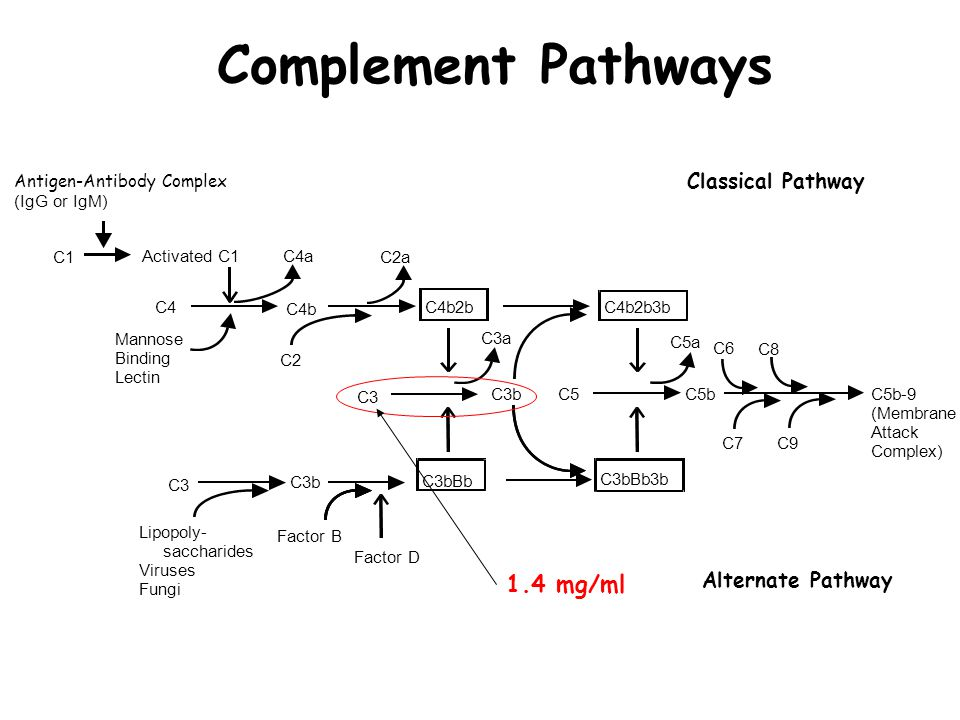 Complement Pathways 1.4 mg/ml Classical Pathway Alternate Pathway