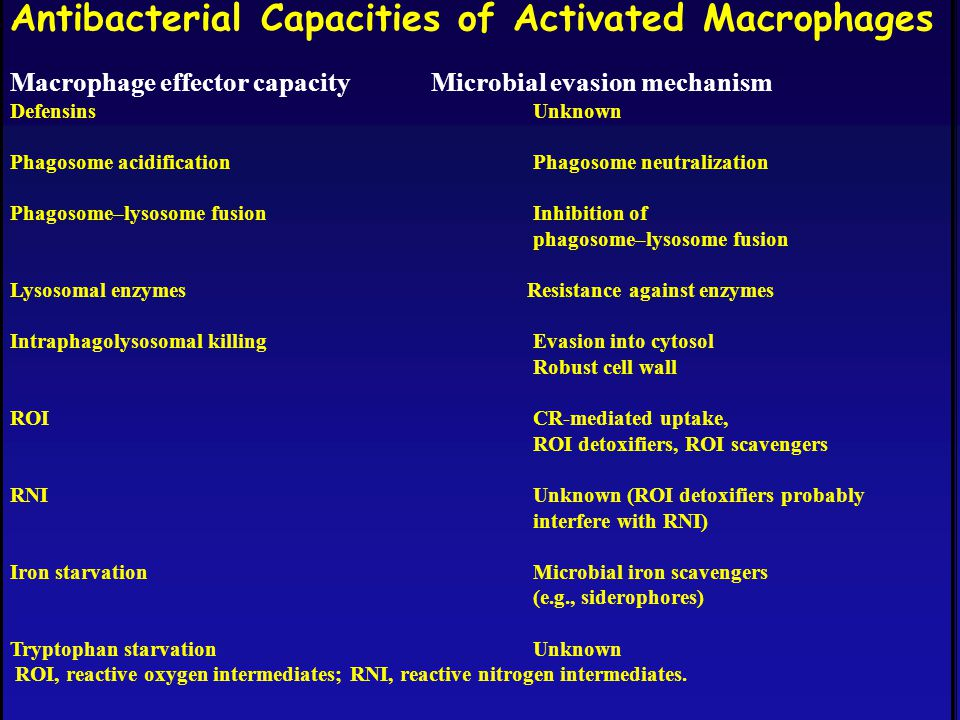 Antibacterial Capacities of Activated Macrophages