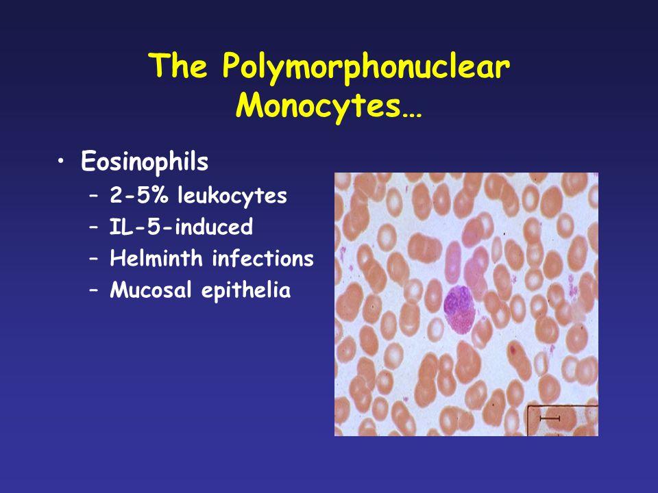 The Polymorphonuclear Monocytes…