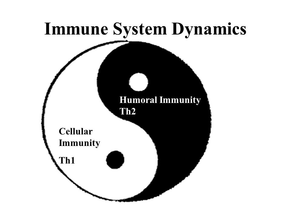Immune System Dynamics