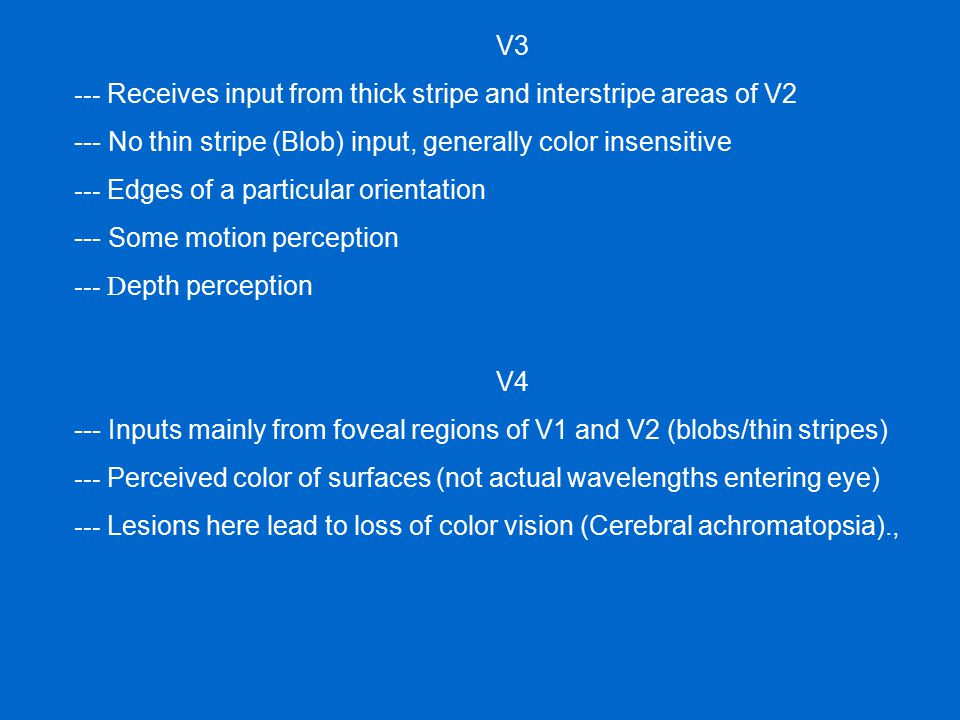 V3 --- Receives input from thick stripe and interstripe areas of V2. --- No thin stripe (Blob) input, generally color insensitive.