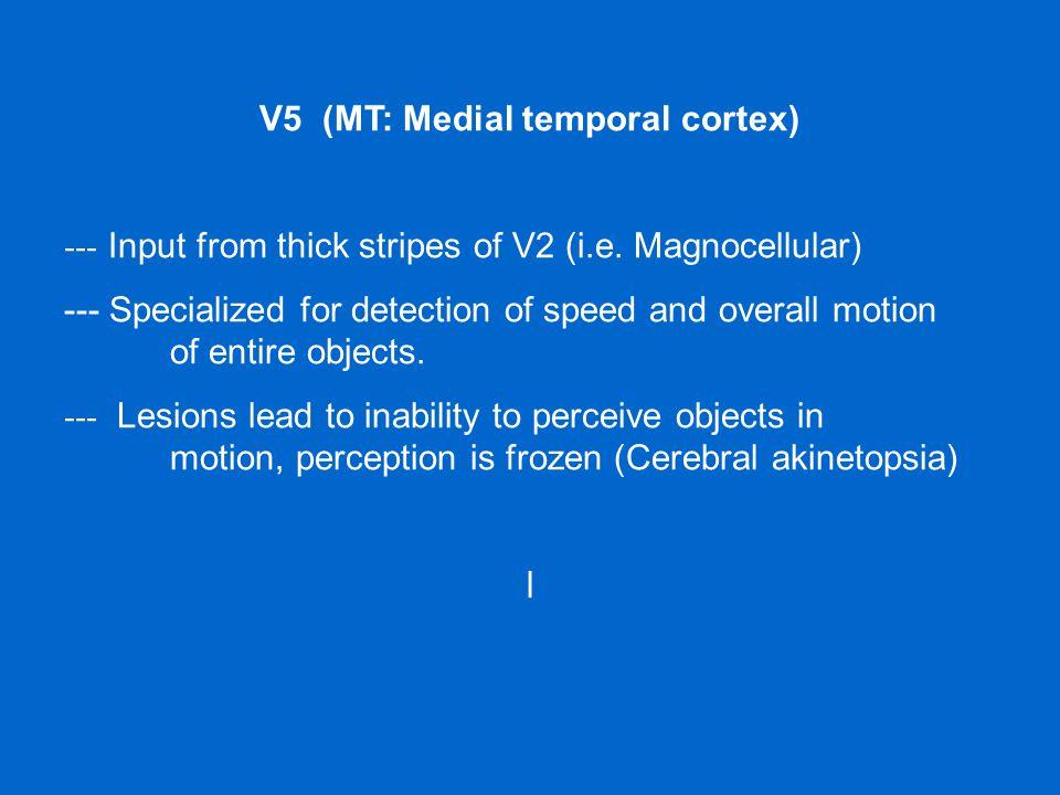 V5 (MT: Medial temporal cortex)