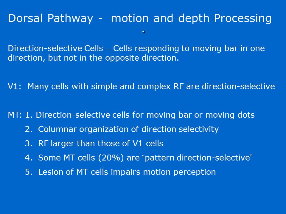 . Dorsal Pathway - motion and depth Processing