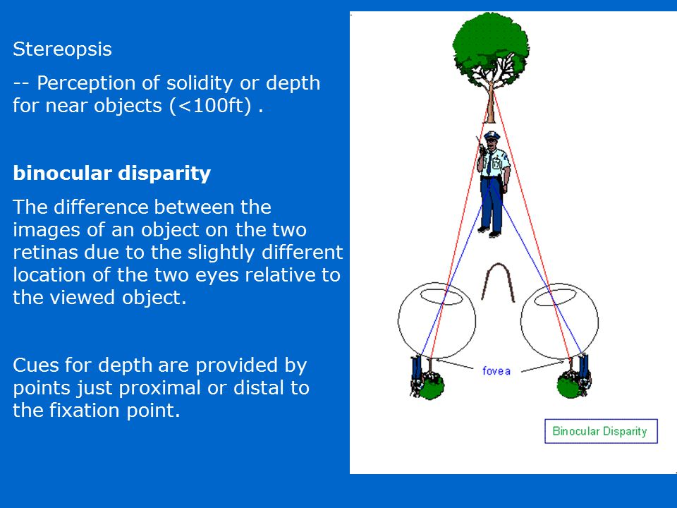 Stereopsis -- Perception of solidity or depth for near objects (<100ft) . binocular disparity
