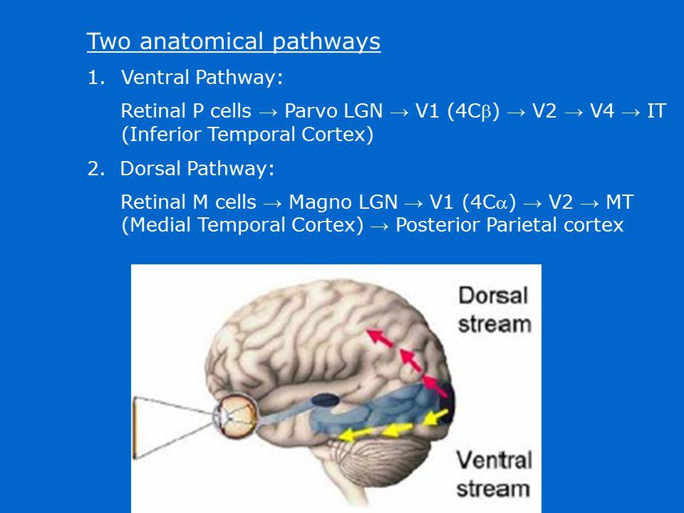 Two anatomical pathways