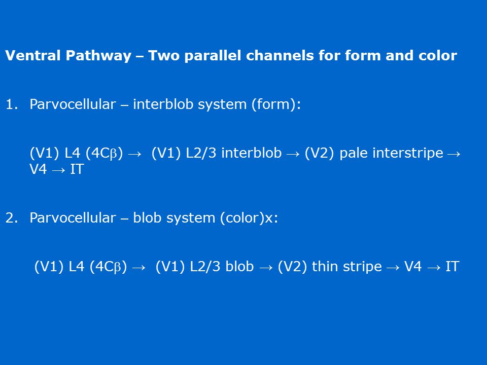 Ventral Pathway – Two parallel channels for form and color