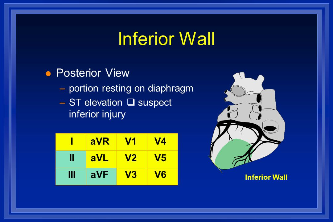 Inferior Wall Posterior View portion resting on diaphragm