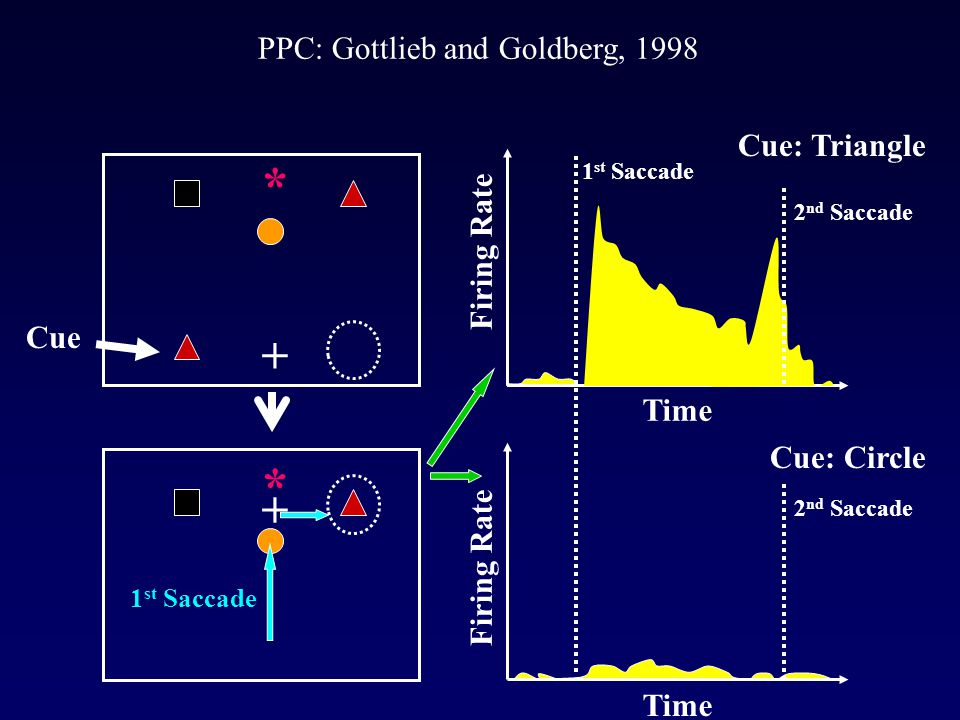 PPC: Gottlieb and Goldberg, 1998