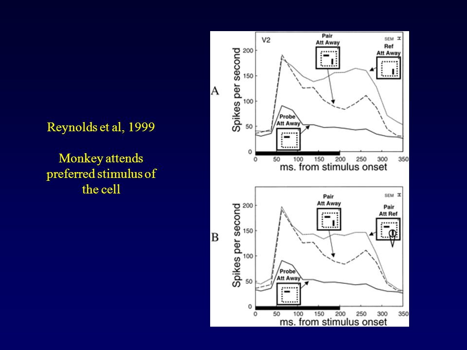 Reynolds et al, 1999 Monkey attends preferred stimulus of the cell