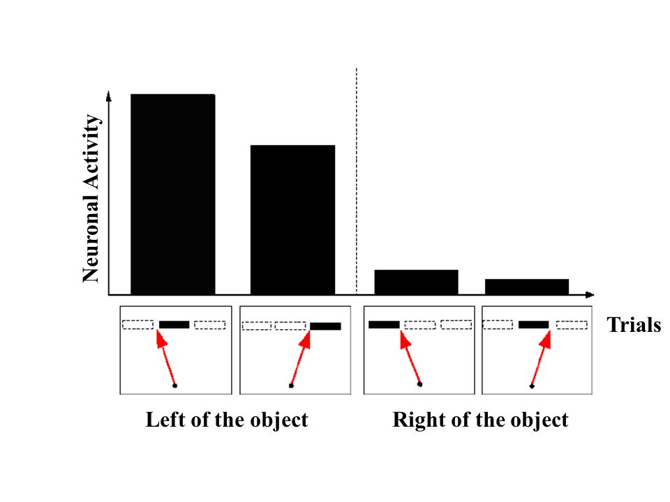 Neuronal Activity Trials Left of the object Right of the object