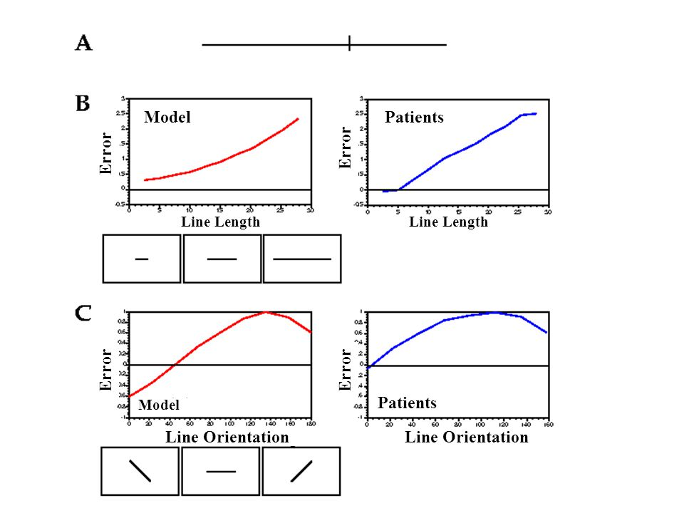 Model Patients Error Error Error Error Patients Line Orientation