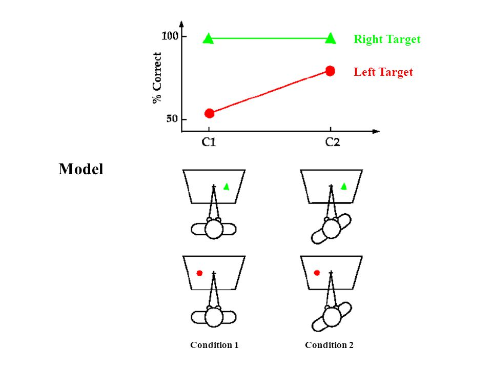 Right Target Left Target Model Condition 1 Condition 2