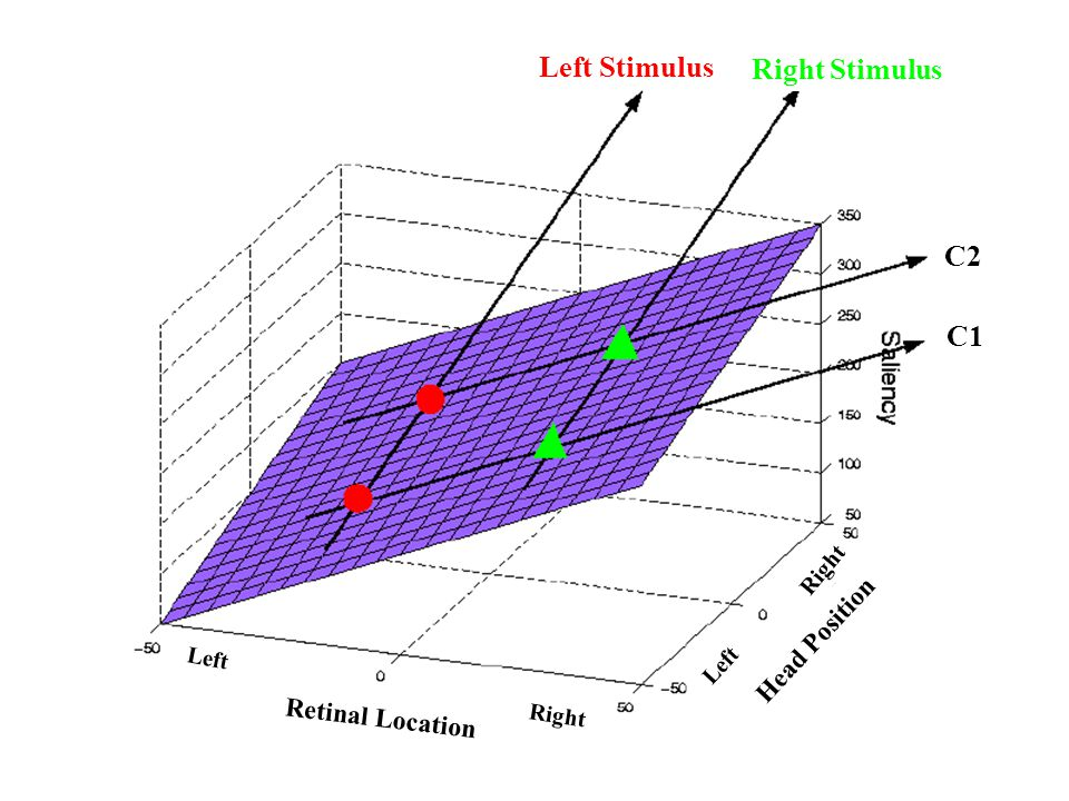 Left Stimulus Right Stimulus C2 C1 Head Position Retinal Location