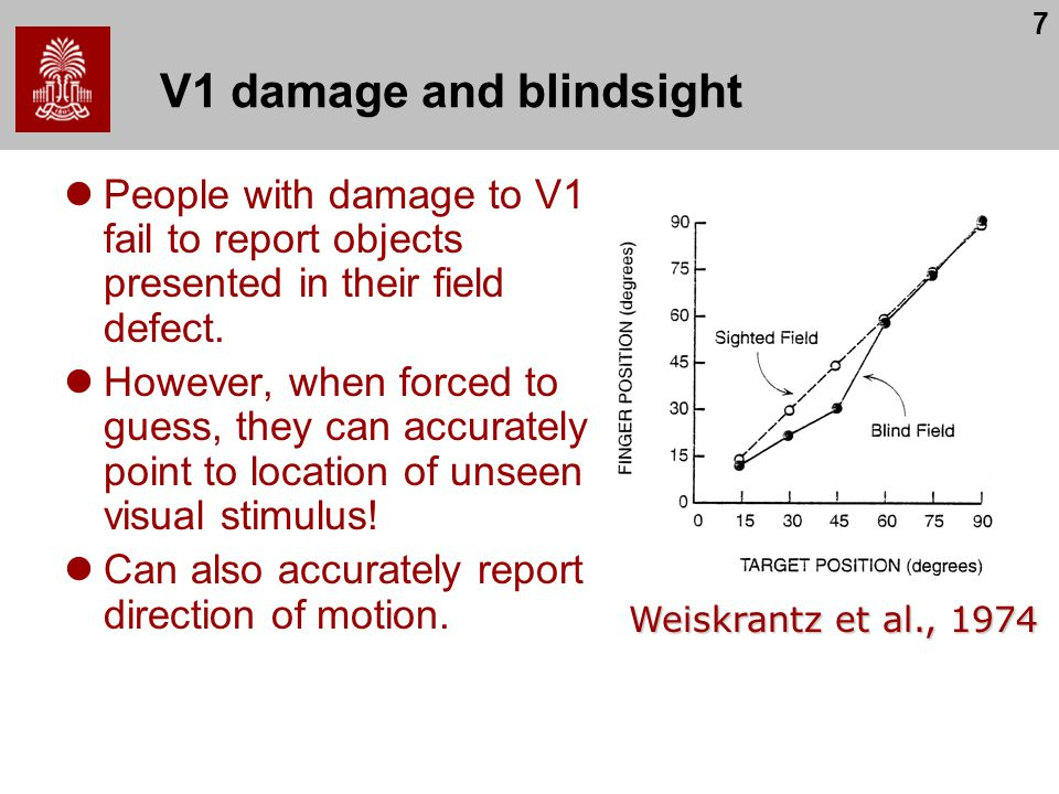 V1 damage and blindsight
