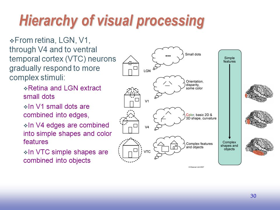 Hierarchy of visual processing