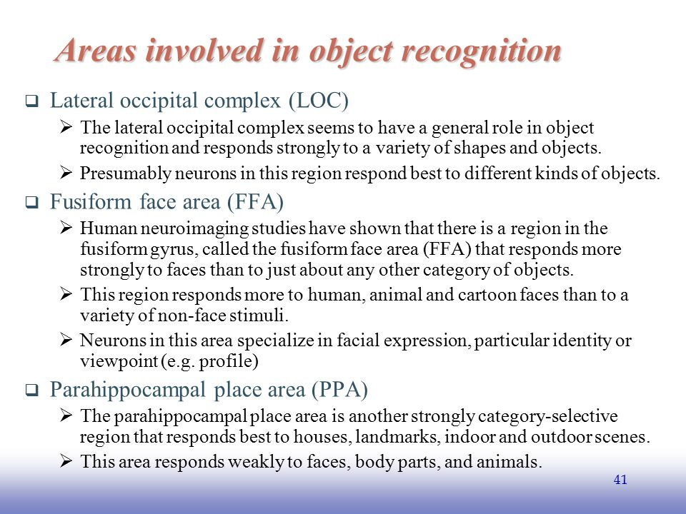 Areas involved in object recognition