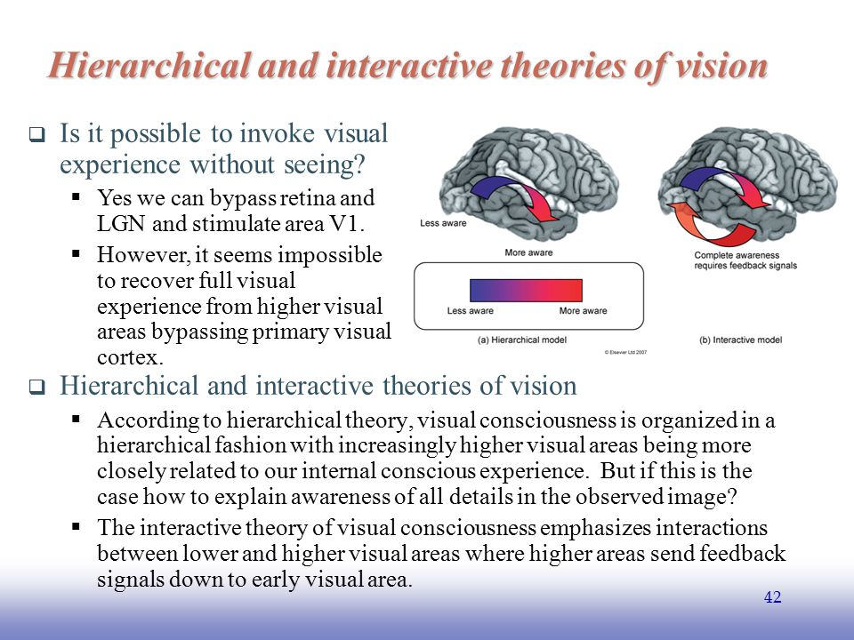 Hierarchical and interactive theories of vision