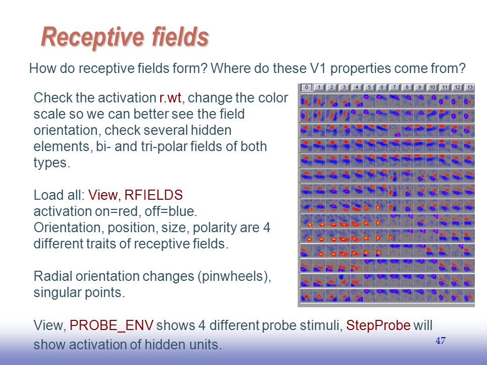 Receptive fields How do receptive fields form Where do these V1 properties come from