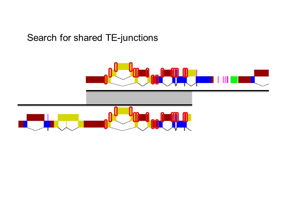 Search for shared TE-junctions