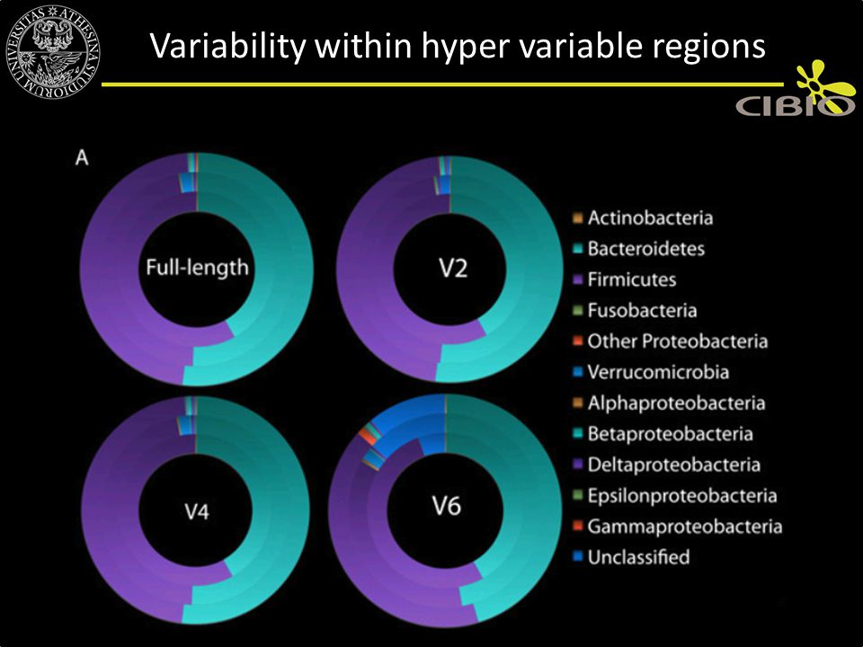 Variability within hyper variable regions