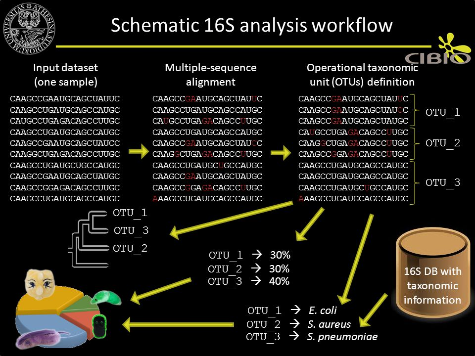 Schematic 16S analysis workflow