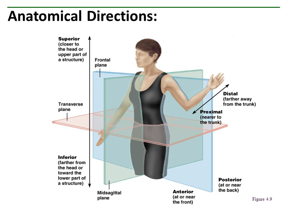 Anatomical Directions: