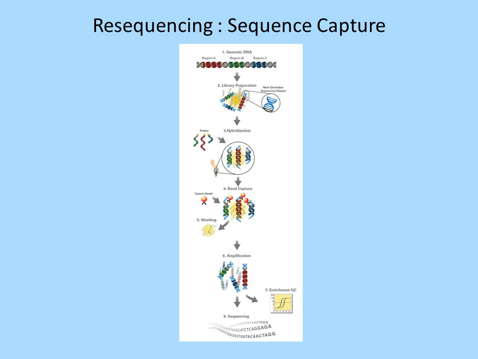 Resequencing : Sequence Capture
