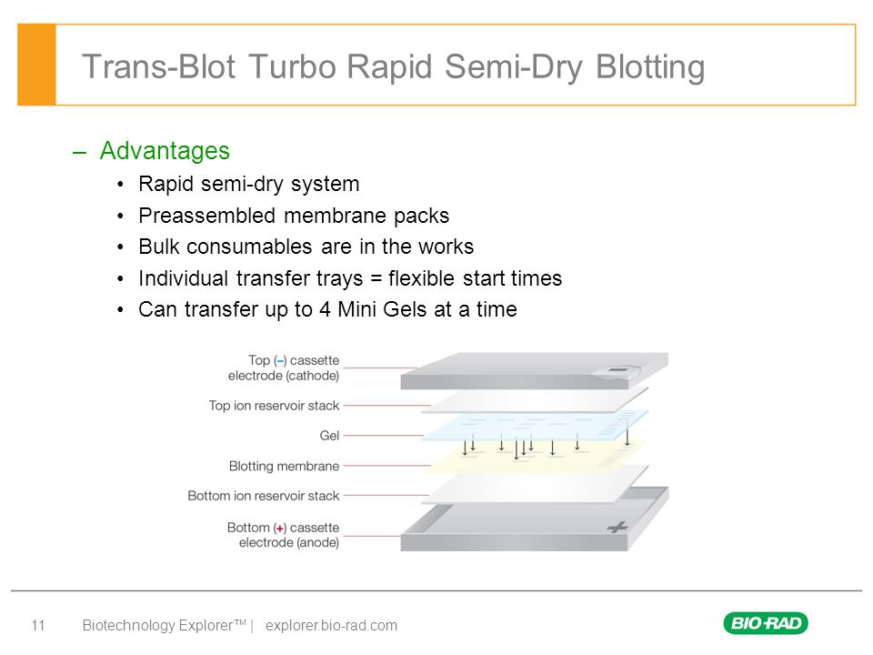 Trans-Blot Turbo Rapid Semi-Dry Blotting