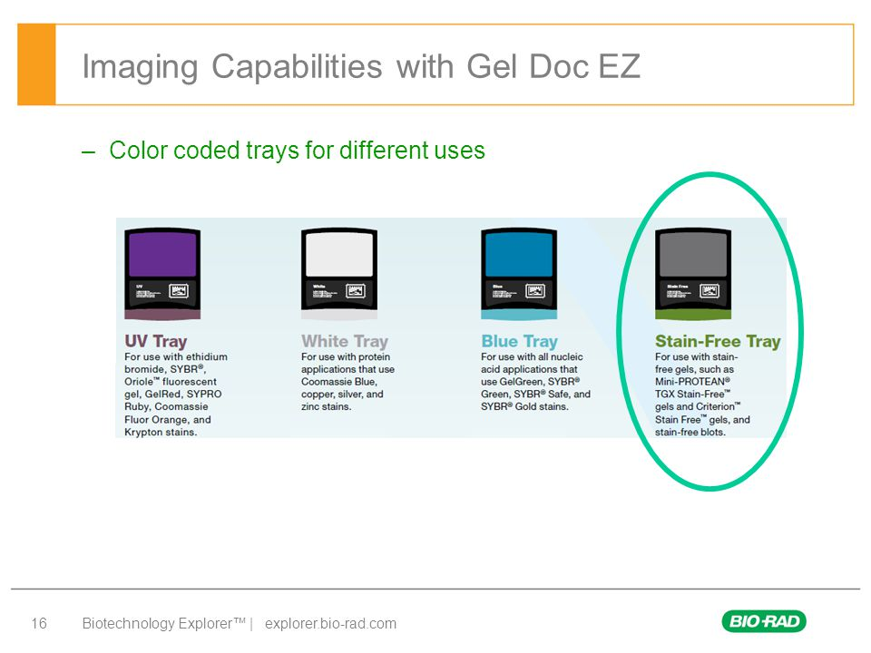 Imaging Capabilities with Gel Doc EZ
