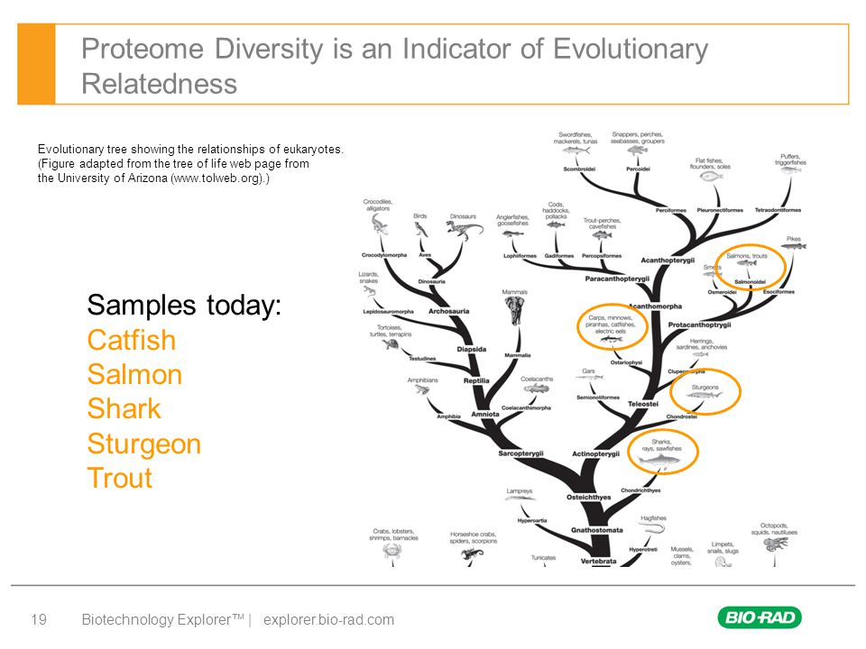 Proteome Diversity is an Indicator of Evolutionary Relatedness