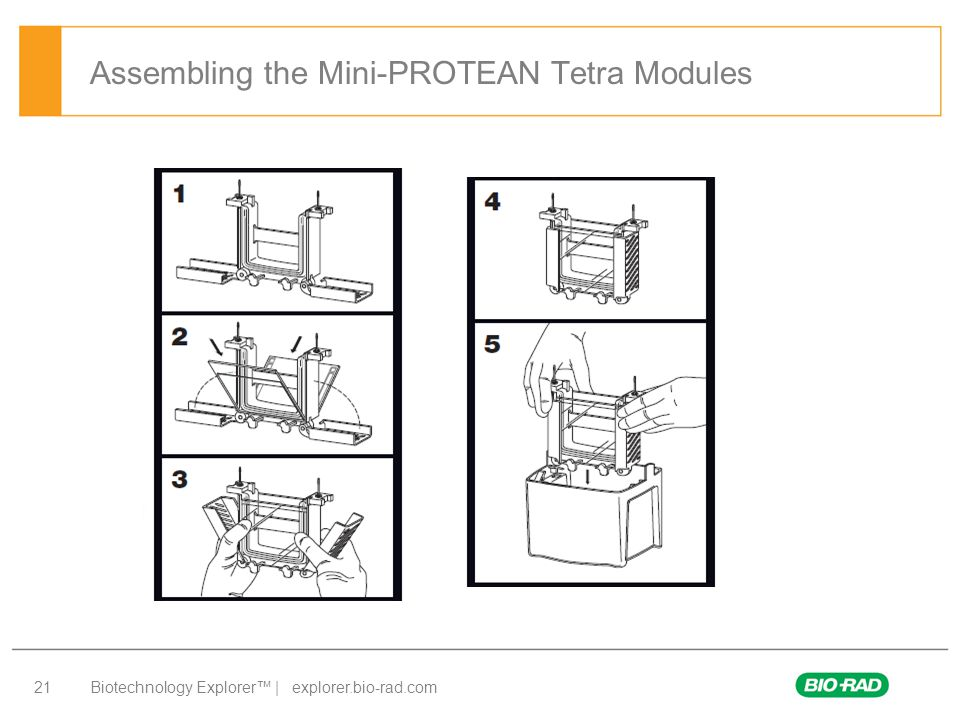 Assembling the Mini-PROTEAN Tetra Modules