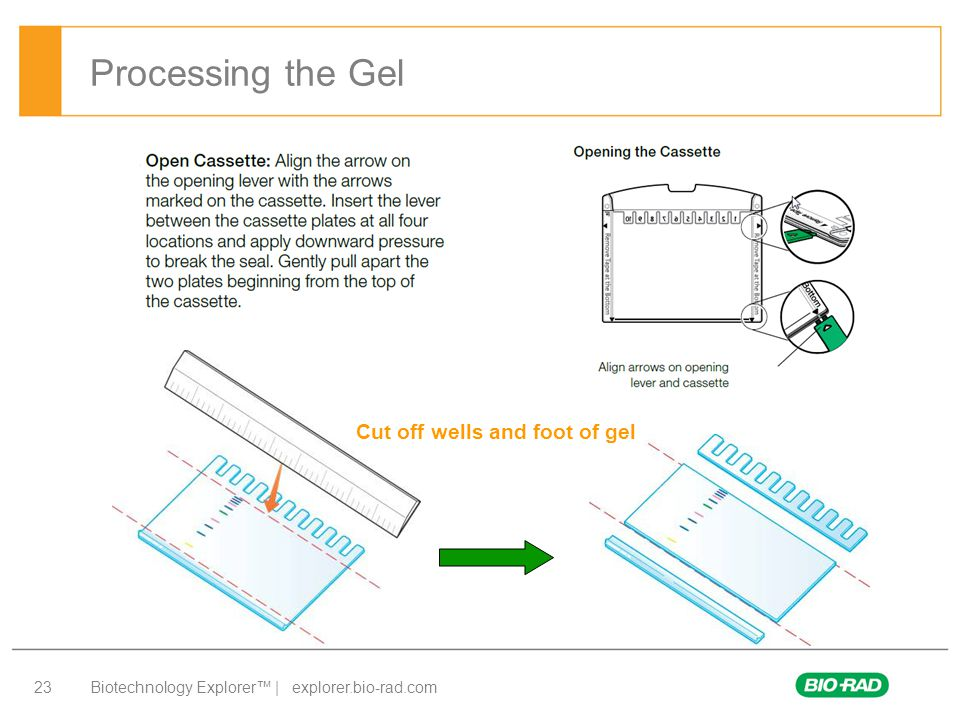 Processing the Gel Cut off wells and foot of gel