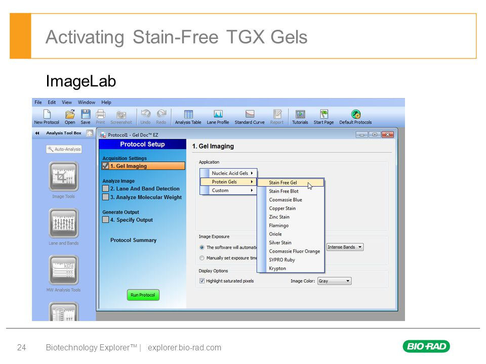 Activating Stain-Free TGX Gels