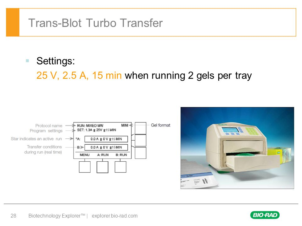 Trans-Blot Turbo Transfer