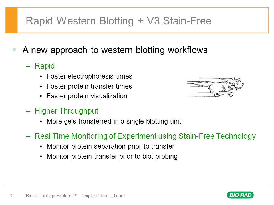 Rapid Western Blotting + V3 Stain-Free
