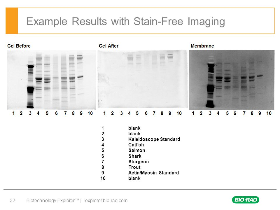 Example Results with Stain-Free Imaging